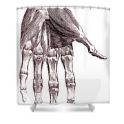 Muscles, Hand, Albinus Illustration Shower Curtain