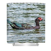Muscovey Duck Shower Curtain