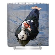 Muscovy 16-07 Shower Curtain