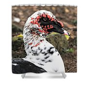 Muscovy Duck Shower Curtain