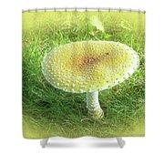 Mushroom - Amanita Muscaria Guessowii  Shower Curtain