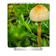 Mushroom And Grass Shower Curtain