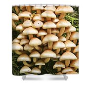 Mushroom Condo Shower Curtain