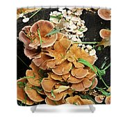 Mushroom Corsage Shower Curtain