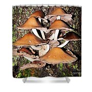 Mushroom Coven Shower Curtain