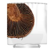 Mushroom Gills Shower Curtain