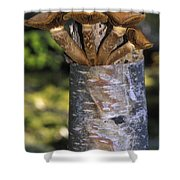 Mushroom Growing From A Birch Tree Shower Curtain