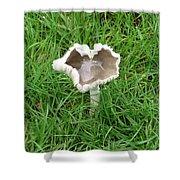 Mushroom Heart Shower Curtain