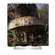 Mushroom II Shower Curtain