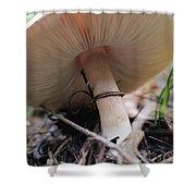 Mushroom Shower Curtain
