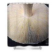 Mushroom Macro Expressionistic Effect Shower Curtain