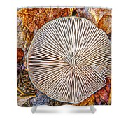Mushroom On Fall Floor Shower Curtain