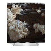 Mushroom On Idaho Log Shower Curtain