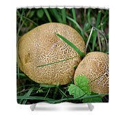 Mushroom Pair Shower Curtain