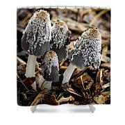 Mushroom Quartet Shower Curtain