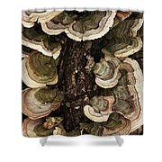 Mushroom Shells By The Lake Shore Shower Curtain