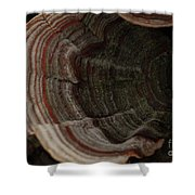Mushroom Shells Shower Curtain
