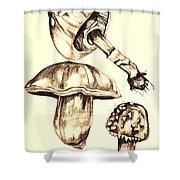 Mushroom Study 4 Shower Curtain