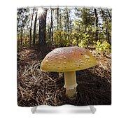 Mushroom Toadstool Shower Curtain