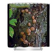 Mushroom Tree Trunk Shower Curtain