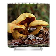 Mushroom Trio Shower Curtain