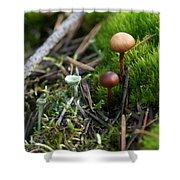 Mushroom Tundra Shower Curtain