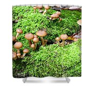 Mushrooms And Moss 2 Shower Curtain