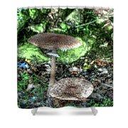 Mushrooms Hdr Shower Curtain