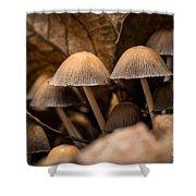 Mushrooms Hidden Between The Leaves Shower Curtain