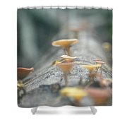 Mushrooms In The Trunk Shower Curtain