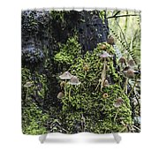 Mushroom Colony Shower Curtain