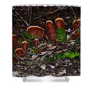 Mushrooms,log And Ferns Shower Curtain