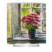 Musing-gerberas At The Window Shower Curtain
