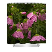 Musk-mallows Refreshed Shower Curtain