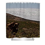 Musk Ox In Front Of Greenlandic Icecap Shower Curtain