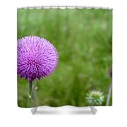 Musk Thistle Bloom Cycle Shower Curtain