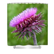 Musk Thistle Blooming Shower Curtain