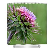 Musk Thistle In Bloom Shower Curtain