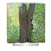 Muskoka Maple Shower Curtain