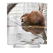 Muskrat Spring Meal Shower Curtain