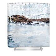 Muskrat Spring Swim Shower Curtain