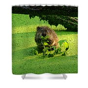 Muskrat Susie Or Muskrat Sam Shower Curtain