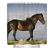 Mustang And Clouds 1 Shower Curtain by Roger Snyder