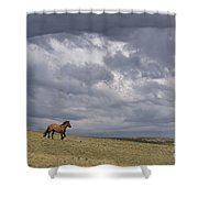 Mustang And Stormy Sky Shower Curtain