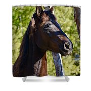 Mustang Horse Shower Curtain