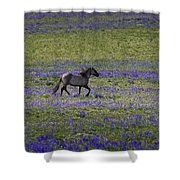 Mustang In Lupine 1 Shower Curtain by Roger Snyder