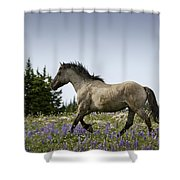 Mustang Running 2 Shower Curtain