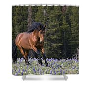 Mustang Stallion And Lupines Shower Curtain