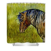 Mustang Stallion Shower Curtain