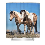 Mustang Twin Stallions Shower Curtain
